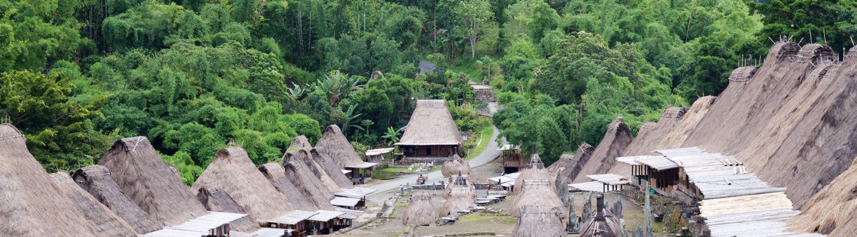 Kapuziner-INDONESIEN UND MADAGASKAR